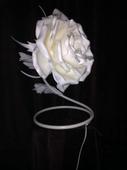 Роза настольная
